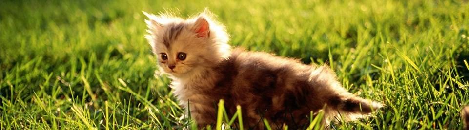 grasscat