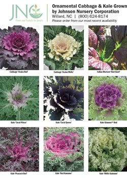 Ornamental Cabbage & Kale Chart