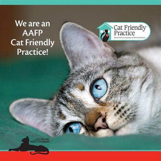 We are an AAFP Cat Friendly Practice