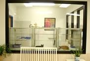 The Sound Cat Veterinary Hospital